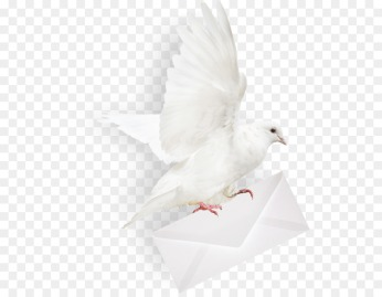 kisspng-homing-pigeon-columbidae-mail-envelope-taube-5b36edec3cb666.3803465215303265082487